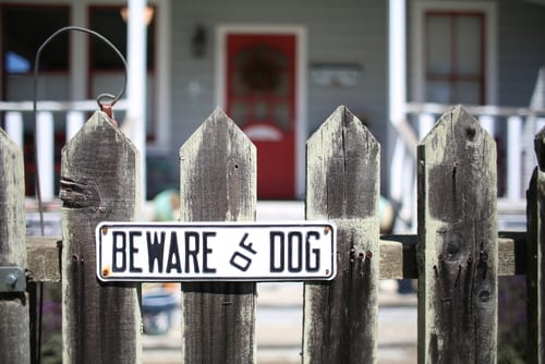 Tips to Avoid NC Dog Attacks & Bites